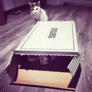 pisica revine
