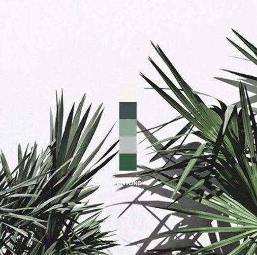 verde kale